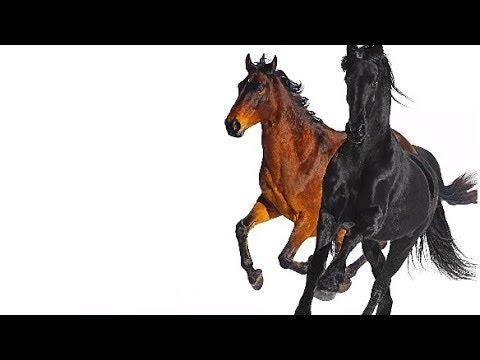 Lil Nas X - Old Town Road Ft Billy Ray Cyrus Remix [LYRIC VIDEO]